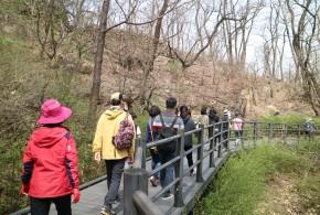"""[회원홍보사업] 나리나리개나리~ """"봄날, 길을 걷다"""""""